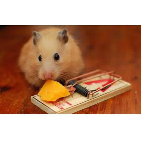 Trampa para ratones grande la cobacha - Trampas para ratas grandes ...